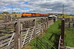 By the old stock pens (Moffat Road) Tags: bnsf graintrain grainempty ge ac4400cw 5611 stockpens stockloader toston montana montanaraillink mrlsecondsub mrl2ndsub locomotive mt train railroad gate rails wood clouds