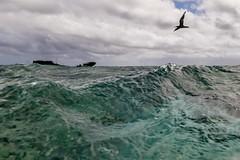 Bird Splits-3 (Quick Shot Photos) Tags: canon canoncollective heronisland queensland underwater snorkel bogie australia au