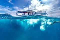 Dive In-1 (Quick Shot Photos) Tags: australia canon canoncollective greatbarrierreef heronisland queensland underwater bogie au
