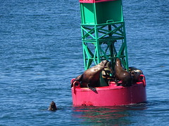 DSC03625 (jrucker94) Tags: juneau alaska cruise cruiseport seal seals buoy ocean inlet red green
