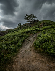 Under Storm Clouds (gabormatesz) Tags: loughrigg england unitedkingdom gb canon canon80d 1018mm nature naturephotography mountain road pathway clouds cloudscape cloud sky storm tree grass photography hill hillscape