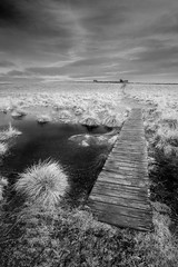 Bible Law, Holy Island (Julian Barker) Tags: bible law northumberland holy island lindisfarne sea coast julian barker canon dslr monochrome blackand white infra red conversion contrast