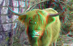 Highlander-cow op Eiland van Brienenoord Rotterdam 3D (wim hoppenbrouwers) Tags: anaglyph stereo redcyan highlandercow op eiland van brienenoord rotterdam 3d eilandvanbrienenoord