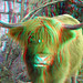 Highlander-cow op Eiland van Brienenoord Rotterdam 3D
