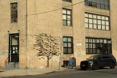 pejac (Luna Park) Tags: ny nyc newyork brooklyn streetart tree pejac lunapark bricks illusion pork