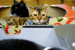 DSCF7059-ps-3000 (studiofuntas) Tags: animal cat cats catcafe seoul korea southkorea pet indoor studiofuntas funtas holiday 犬写真家 猫写真家 猫写真 犬写真 動物写真 出張撮影 撮影 スタジオファンタス 地方遠征 portrait ポートレート kids写真 familyphoto kidsphoto couplephoto ファンタス ロケーション撮影 リクエスト撮影 locationphoto locationshooting