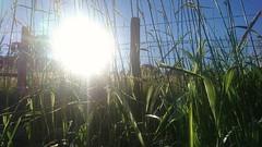 Evening sun (jimea) Tags: eveningsun