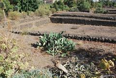 Піраміди в Гуїмар, Тенеріфе, Канари  InterNetri  026