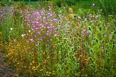 Oregon Wild Flowers (Mule67) Tags: flowers wild fern hill wetland forest grove oregon