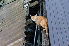 cat288, citizen of Krasnodar (cat_collector) Tags: russia summer cats krasnodar sonyilce6000 sonyepz1650mmf3556oss