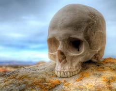 Skulldugery in New Mexico (Dick Shaffer) Tags: skulls skull ojito newmexico photoart eerie spooky alarming abandoned
