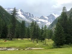 Aosta A021. (Joanbrebo) Tags: montagne mountains montaña muntanya arboles arbres tree naturaleza natura nature paisatge paisaje landscape iphone365 iphonex italia valled'aosta cogne greatphotographers
