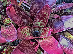Bromeliad (Aussie~mobs) Tags: bromeliad plant garden nature brisbane queensland australia art artwork creative
