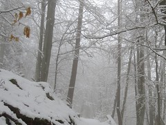 Fog and snow : the white symphony (ViveLaMontagne67) Tags: france vosges grandfaudé hiver brouillard arbres branches trees fog winter snow forest white blanc