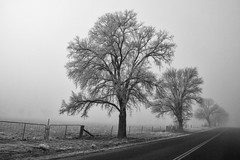 Ice Covered Tree's (Richard Sollorz Photography) Tags: bathurst nsw australia central west landscape black white monochrome sigma country road trees frost fog f28 winter