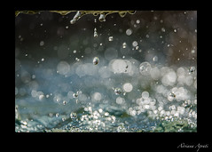 Roma, fontana in piazza S. Maria in Trastevere, particolare (adrianaaprati) Tags: rome fountain water drops july summer bokeh roma fontane blur