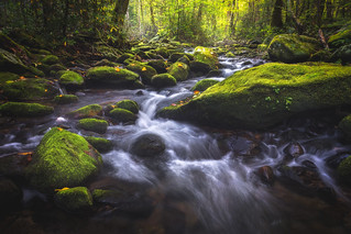 Roaring Fork Motor Trail, Great Smoky Mountains National Park, Tennessee