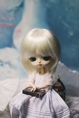 (hauntiing) Tags: pullip pullips dal dals doll dolls toy toys pullipdoll pullipdolls daldoll daldolls dalcinnamoroll pullipcinnamoroll dollphotography toyphotography