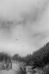 (BuyFilmNotMegapixels) Tags: seagull yellowfilter nikonosv cinestil bwxx sylt bw
