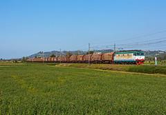 FS E652 164 (maurizio messa) Tags: e652 tigre cargo alpc mau bahn ferrovia freighttrain fret guterzuge treni trains railway railroad lombardia pavese nikond7100