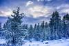 Yellowstone Snow (slange789) Tags: yellowstone national park