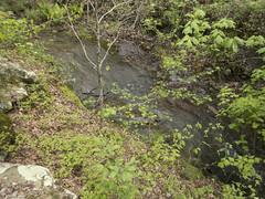 RED02600 (David J. Thomas) Tags: petitjeanstatepark morrilton arkansas hiking caving bedrock forests trees rocks streams creeks waterfalls cedarcreek rockhousecave asgcsymposium