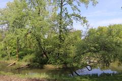 Park Skaryszewski, Warsaw, Poland (LeszekZadlo) Tags: park green blue sky water trees lake spring nature natureza naturaleza landscape landschaft paisaje polska poland polonia pologne polen warszawa warsaw varsovie warschau eu ue europe