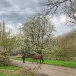 Lente wandeling, Klompenpad, Zeist, Nederland - 0936 thumbnail