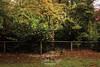 0S1A3138 (Steve Daggar) Tags: mtwilson mountwilson autumn bluemountains trees fog mist