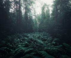 066 (petrisalonen) Tags: trees saniainen light fog mist darl landscape blue night green nature fin finland suomi white summer kesä fern luonto suomenluonto summernight beautiful north nordic