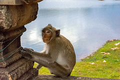 Angkor Wat  Monkey (Tony_Brasier) Tags: monkey water grass lovely stones nikond7200 18140mm location cambodia lights