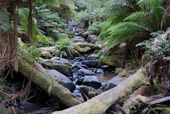 Triplet Falls (dichiaras) Tags: australia victoria travel day nature ferns treefern tree water waterfall river wilderness prehistoric