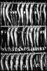 Onagawahama, Onagawa-chō, Oshika-gun, Miyagi-ken (GioMagPhotographer) Tags: marketstore onagawachō catdogbirdfish japonica miyagiken leicam9 tohoku dining japanproject japan oshikagun onagawach