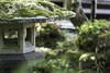 Fabulous Moss (Norse_Ninja) Tags: japan2017 journeyjd17 travellingviking japan nara temple moss panasonic gh5