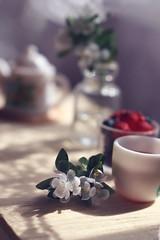 Jasmine and tea (kinmegami) Tags: rement paper miniatureflowers miniature 16