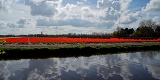 A stripe of Red / Een streep Rood