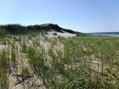 DSCF3186, The Beach, July 2018 (a59rambler) Tags: beach capecod massachusetts