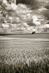 Little Barn on the Palouse (EdBob) Tags: palouse farm farmland barn clouds sky weather sepia monochrome monochromatic blackwhite blackandwhite crop farming easternwashington nopeople northwest pacificnorthwest inlandempire wheat fieldsofwheat old abandoned wood agriculture agricultural washington washingtonstate travel traveling edmundlowephotography edmundlowe usa america