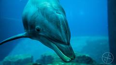 2018-07-22 130023 (Schabing) Tags: delphin jahre zooparks 2018 objektiv unterwasser zielfotos tiere mzuikodigitaled17mm12pro zoonürnberg festbrennweite