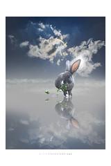 Per un fil di Malva... (Fiorenzo Delegà) Tags: nubi sole sun clouds rabbit coniglio malva mallow rosa rose rosé pink mangiare eat food mirror specchiato