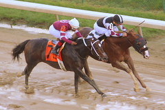 Churchill Downs Race: Chase Greatness in a close win (SeeMidTN.com (aka Brent)) Tags: churchilldowns louisville ky kentucky horse horseracing thoroughbredhorseracing thoroughbred race racing equestrian bmok bmok2 axugky