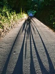 Long shadow.