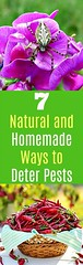 7 Natural and Homema (Fitness Intents) Tags: healthy fitness weight loss motivation motivate
