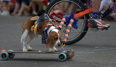 Skateboarding (Scott 97006) Tags: dog canine animal skateboard ride balance spectacle entertainment