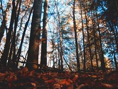 Le marais (jo_murray) Tags: lumixgf7 panasonic panasonicgf7 lumix gf7 nature forest