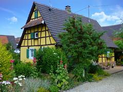 Munchhausen (Bas-Rhin, F) (pietro68bleu) Tags: maison colombages alsace fleurs