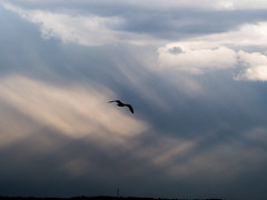 photobomber (RubyT (I come here for cameraderie!)) Tags: olympusomde10ii m75300 wyoming gull sky skyscape clouds bird bif