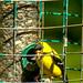 Independence Day backyard birds (4)