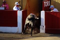 Détails de Ceret 2017 (aficion2012) Tags: ceret france francia corrida bull fight bullfight tauromaquia tauromachie toros toro taureaux escolar gill alberto aguilar torero toreador matador 2017 toril catalogne catalunya cataluña