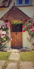 Beauty (ZanetaMaria) Tags: flower flowers garden beautiful naturephotography nature sigma85art canon ilovephotography